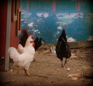 Johnson Family Farms 8