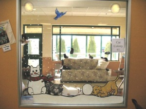 Cat Room SPCA