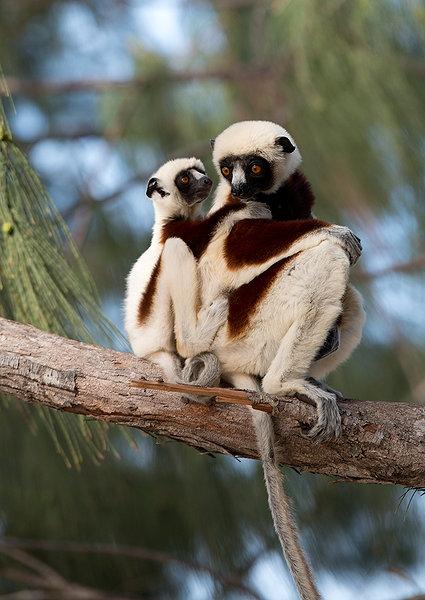 Island Of Lemurs Madagascar